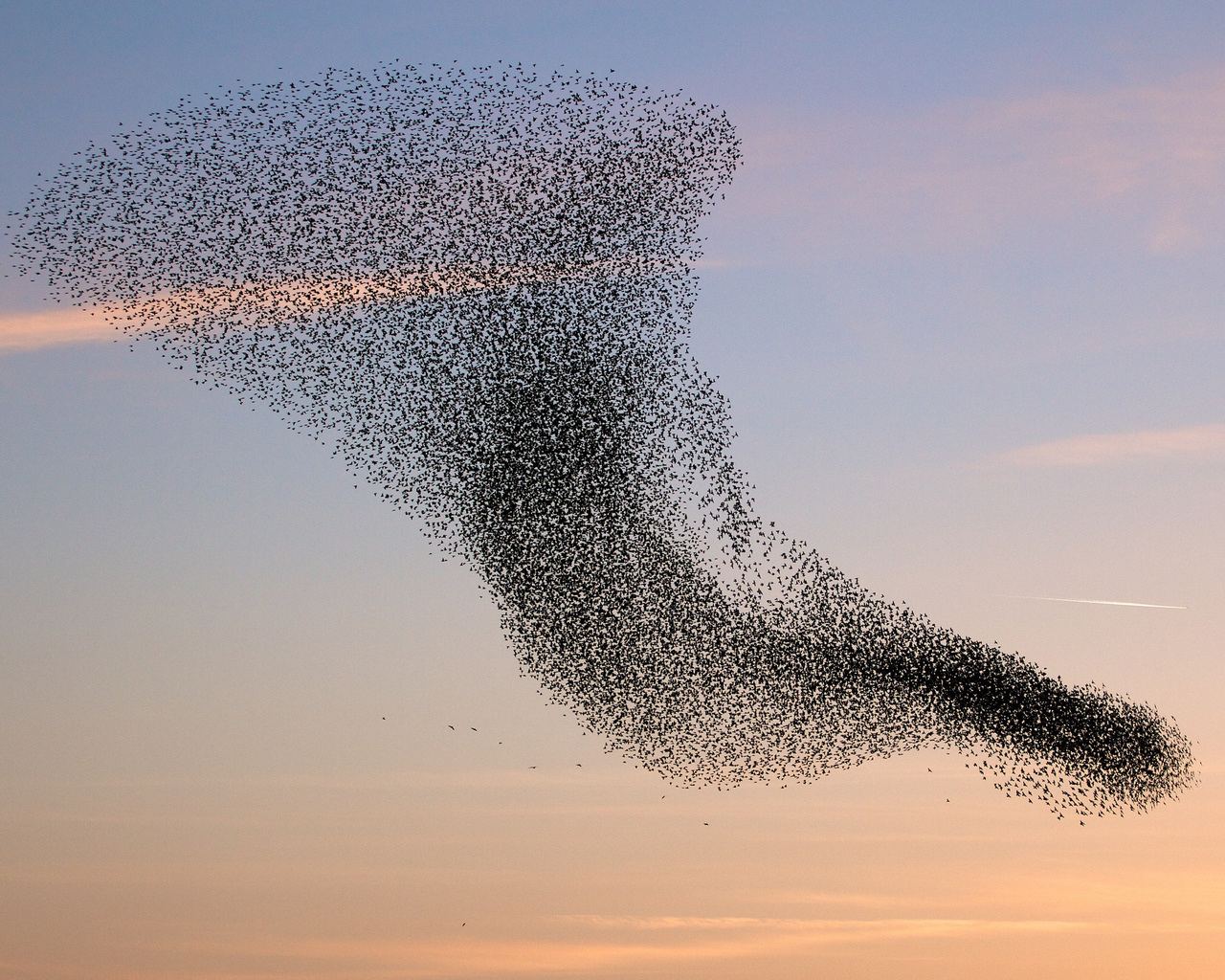 birds-flock-swarm-the-vortex_1280x1024_sc